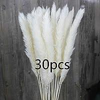 CHBOP 30 x Getrocknetes Pampasgras natürlicher Blumenstrauß Deko für Inneneinrichtungen Fotografie Hochzeit weiß