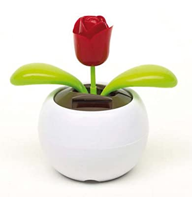 Solarblume 'Waving Rose'