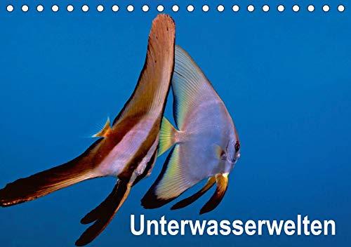 Unterwasserwelten (Tischkalender 2021 DIN A5 quer): Unterwasseraufnahmen von Meerestieren im Mittelmeer, Roten Meer und Indischen Ozean.. (Monatskalender, 14 Seiten ) (CALVENDO Tiere)