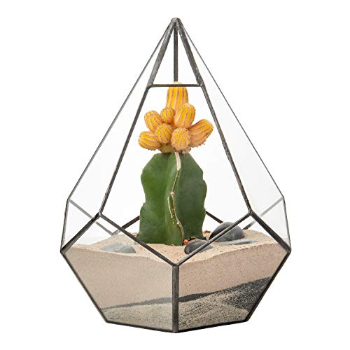 Ultra 12x12x17cm Diamond Teardrop Clear Glass Terrarium Geometrische Form Für Displays Hochzeiten Einzigartig Zentrum Oder Fensterbänke für Luftanlagen Fern Moss Succulents Indoor Garden (Kit Medium Terrarium)