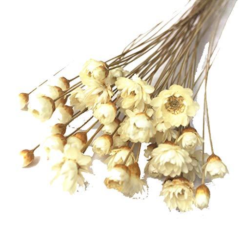 Decoraitve flores secas mini Daisy ramo de manzanilla flores para decoración, 200tallo blanco