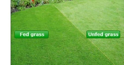Portal Cool 2kg: prato di erba erboso Mini concime granulare Primavera Estate 11-5-5 All Seasons