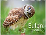 Eulen - Kalender 2018