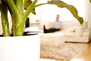 Capteur pour plantes Koubachi WiFi Indoor
