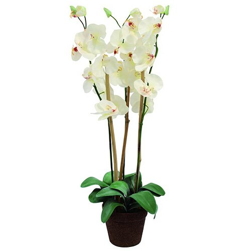 euro-palms-82530328-pianta-ornamentale-orchidea-80-cmbianco-weiss