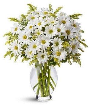 ramo-de-margaritas-blancas-naturales-frescas-flores-a-domicilio-tarjeta-con-nota-persoanlizada-grati