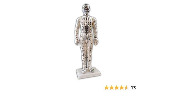 Mannequin D Acupuncture 50cm Amazon Fr Hygiãšne Et Soins Du Corps