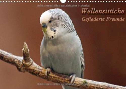Wellensittiche - Gefiederte Freunde (Wandkalender 2014 DIN A3 quer): Außergewöhnliche Fotos von Wellensittichen (Monatskalender, 14 Seiten)