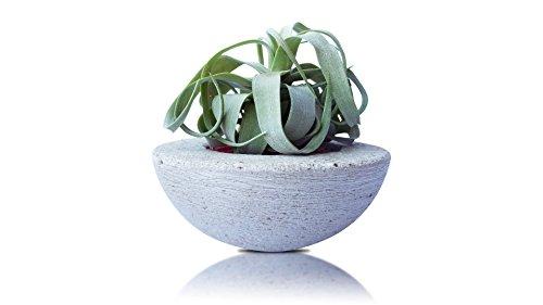 Maceta De Cemento Soporte Para Planta Rara Tillandsia Streptophylla - Maceta De Hormigón Decorativa Redondo Para Interior O Exterior 15 cm - Soporte Para Planta De Aire