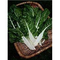 PlenTree Acelga, grandes semillas blancas acanalado del cardo suizo, orgánico, no GMO, 200 de env