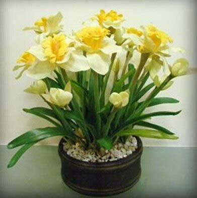 GEOPONICS SEEDS: ZLKING 100 Pcs Schöne Narzisseblume Balkonpflanzen Narzisse Absorption Narcissus Tazetta Bonsai: 7