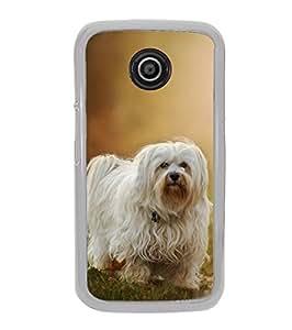 Fuson Designer Phone Back Case Cover Motorola Moto E2 :: Motorola Moto E Dual SIM (2nd Gen) :: Motorola Moto E 2nd Gen 3G XT1506 :: Motorola Moto E 2nd Gen 4G XT1521 ( Dog Playing In The Evening )