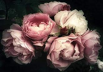 Fototapeten Blumen Bild