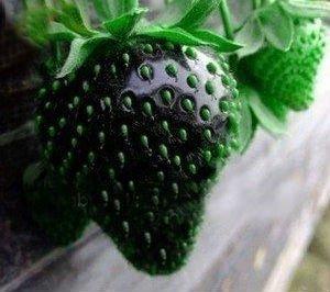 Schwarze erdbeere samen (20)
