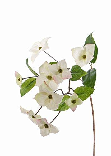 artplants Künstlicher Japanischer Hartriegel Zweig Kohana, 9 Blüten, Creme, 70 cm - Kunstzweig blühend/Plastik Blume (Hartriegel-künstliche Blume)
