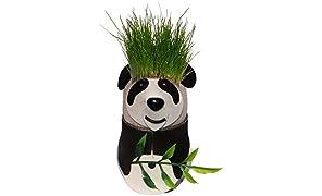 Toiing Plan TOI Panda