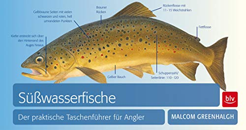 Süßwasserfische: Der praktische Taschenführer für Angler (BLV)