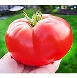 20 Semillas De Tomate Gigante Italiano