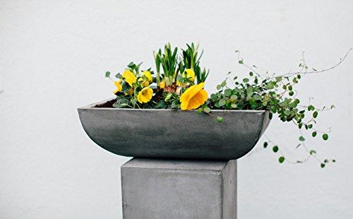 tera-mico-unique-calcestruzzo-bonsai-planter-50-cm-vaso-da-fiori-vaso-per-piante-fioriera-vaso-per-p