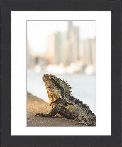 framed-print-of-city-lizard