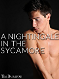 A Nightingale in the Sycamore