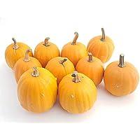 10 große Mandarinkürbisse (Jack be Little): ca. 10 Durchmesser - Kürbisse für Halloween-Deko - als Speisekürbisse