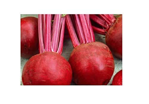 480x Rote Rübe Kugel 2 Nero-Rübensamen Samen Gemüse Garten K377