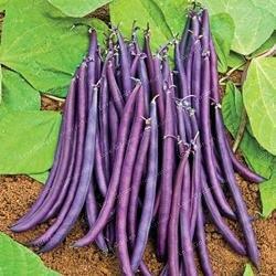 20 pcs/sac de haricots Graines bio délicieux Phaseolus vulgaris plante verte Semences-nutrition Graines de légumes non OGM 4