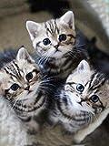 DIOPN Pittura Diamante 5D DIY Three Little Cats Diamante Ricamo Tutti I Trapani Il Gatto sul Cestello Trapano Completo Disegna La Pasta(Diamante Rotondo 40 * 50)