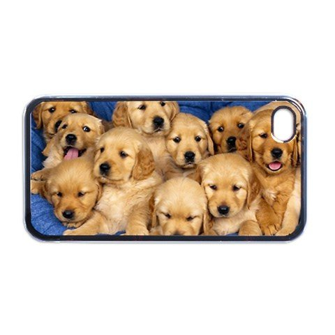 Golden labs litter puppies Apple iPhone 4 or 4S PLASTIC cell phone Case / Cover (Puppy Litter)