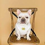 Saltadores de cachorros Artículos para mascotas Varios Ropa para perros caliente Oso de peluche Xiong Pa Ge Otoño e invierno Use suéter con capucha para mascotas para enviar ropa Taylor (Color: Rosa,