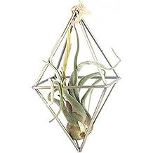 Rustic-Fioriera sospesa forma geometrica in metallo in stile rustico con supporto per piante Tillandsia per porta, in bronzo, a forma di vaso, colore: nero/bronzo, metallo, octahedron bronze,