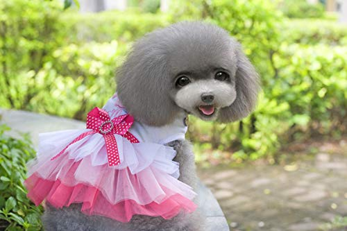 HVTKL Haustier Hund Kleidung Haustier Baumwolle Kleidung Lippe Gaze Rock Teddy Rock HVTKL (Color : Lips Skirt Pink, Size : M) -