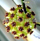 semi Hoya, seme di fiore in vaso, varietà completa semi carnosa Hoya 10 particelle / pacchetto