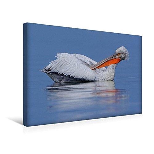 Preisvergleich Produktbild Premium Textil-Leinwand 45 cm x 30 cm quer, Krauskopfpelikan | Wandbild, Bild auf Keilrahmen, Fertigbild auf echter Leinwand, Leinwanddruck (CALVENDO Tiere)