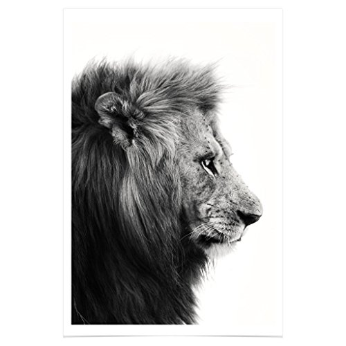 The Wonderwall Shop PH345A2 // Lion poster // black white animal // stampa fotografica arte adesivo tela doni // 42 x 61 cm