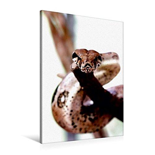 Premium Textil-Leinwand 60 cm x 90 cm hoch, Boa constrictor | Wandbild, Bild auf Keilrahmen, Fertigbild auf echter Leinwand, Leinwanddruck (CALVENDO Tiere)