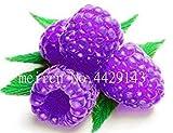 Bonsai Frutta Colorata Lampone pianta di gelso Black Berry in Vaso da Giardino Blackberry Sementes de frutas Raras 200 pc in Vendita: 9
