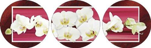 artland-photo-sous-verre-motif-fleurs-orchidees-orchidees-w-l-rouge-en-plusieurs-tailles-rouge-3tlg-