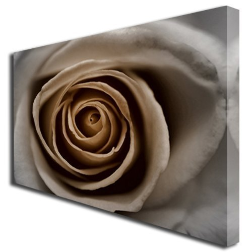 Sepia rosas flores caja cuadro de lienzo grandes 265