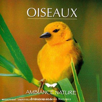 oiseaux-ambiance-nature