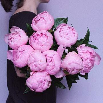 DaDago 10 Unids/Pack Semillas De Flores De Peonía China Perenne Paeonia Suffruticosa Bonsai Plantas Plantas De Jardín - Rosa