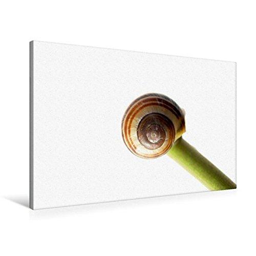 Premium Textil-Leinwand 90 x 60 cm Quer-Format Müde | Wandbild, HD-Bild auf Keilrahmen, Fertigbild auf hochwertigem Vlies, Leinwanddruck von Tanja Riedel (CALVENDO Tiere)