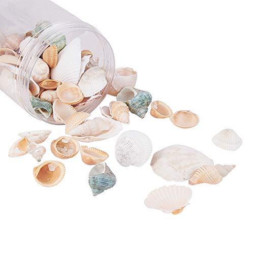 367 g/Karton Shell Perlen natürlichen Seashell Charms für Anhänger DIY Handwerk Machen Home Party Dekoration, natürliche Farbe, gemischten Stil ()