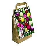Greenbrokers bulbi di tulipano, diversi colori, confezione da 35