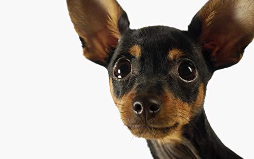 Lhyxh Schwarzer Chihuahuahund 5D Diamant Stickerei Tier Kreuzstich Voller Kreis DIY Malerei Mosaik Bild Puzzle