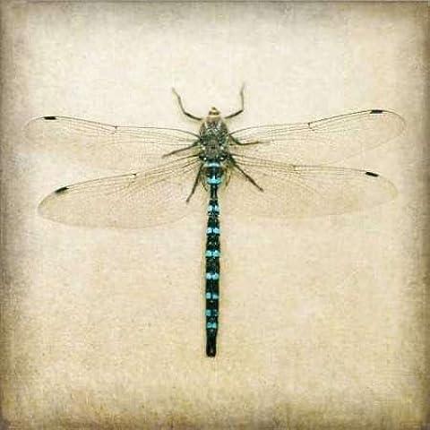 Feelingathome.it, STAMPA SU TELA 100% cotone INTELAIATA Dragonfly I cm 48x48 (dimensioni personalizzabili a (Dragonfly Crema)