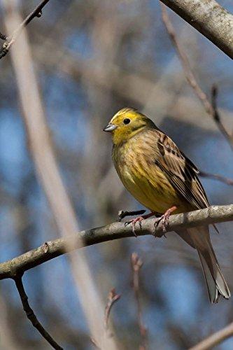Bird Notebook por Wild Pages Press