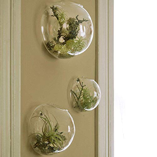 Ensemble de 3 vases muraux en verre, terrariums à mur de bulles, terrariums en verre soufflé, jardinières d'intérieur, supports pour plantes aériennes, jardinières murales succulentes (sans plantes)