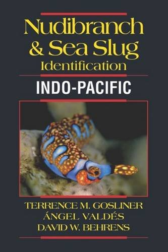 nudibranch-sea-slug-identification-indo-pacific